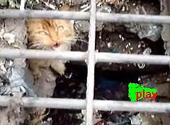 pincha pa ver gato encerrado